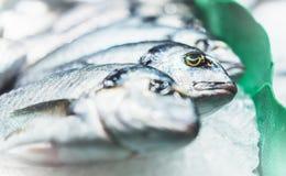 Ptasia dorado ryba na lodowym tle na rynku, closup świezi morscy produkty w restauracji, pożytecznie żywienioniowy denny jedzenie obrazy stock