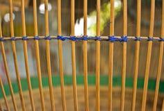 Ptasia klatka Zdjęcie Royalty Free