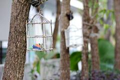 Ptasia klatka obrazy stock