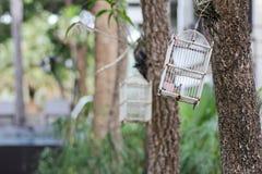 Ptasia klatka fotografia stock
