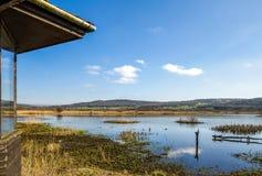 Ptasia kryjówka, Leighton mech RSPB, Lancashire, Anglia zdjęcie royalty free