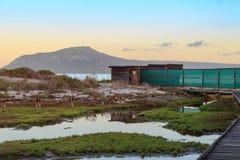 Ptasia kryjówka przy zachodnie wybrzeże parkiem narodowym - Południowa Afryka Zdjęcie Stock