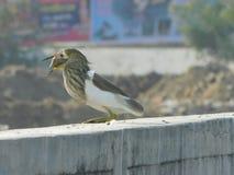Ptasia migracja człowieków postronnych ptakami zdjęcie stock