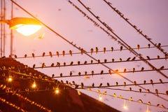 Ptasia migracja Kierdel stajni dymówka na drutach i lataniu w raja obraz royalty free