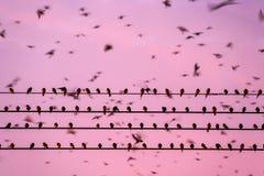 Ptasia migracja, kierdel stajni dym?wka na drutach i latanie w zmierzchu niebie, Betong miasto, Yala, Po?udniowy Tajlandia godzin obraz royalty free