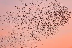 Ptasia migracja przy zmierzchem fotografia royalty free