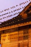 Ptasia migracja przy zmierzchem, kierdlem stajni dymówka na i okapami drewniany dom, druty Betong miasto, Yala, Południowy Tajlan zdjęcia stock