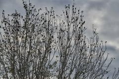 Ptasia migracja w jesieni Zdjęcie Royalty Free