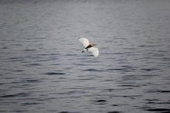 Ptasia pełnia Zdjęcie Stock