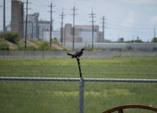Ptasia pozycja na Drucianym ogrodzeniu przed fabryką chemikaliów obraz royalty free