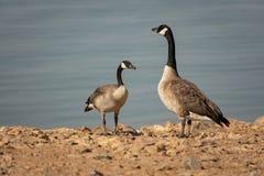 Ptasia rodzina obraz stock