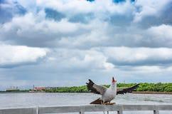 Ptasia statua przy uderzeniem Poo, Samut Prakan który jest popularni touris, obraz stock