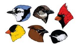 Ptasie głowy ilustracja wektor