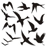 ptasie latające sylwetki royalty ilustracja
