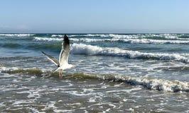 Ptasie ocean fala Obraz Royalty Free