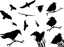 Ptasiej sylwetki klamerki Zwierzęca sztuka Obrazy Royalty Free