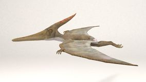 Pteranodon恐龙 免版税库存照片