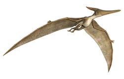 Pteranodon Στοκ φωτογραφία με δικαίωμα ελεύθερης χρήσης