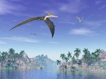 Pteranodon birds  - 3D render. Pteranodon birds flying upon islands with palm trees by beautiful day Royalty Free Stock Photos