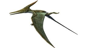 Pteranodon Dinosaur Wings down. Pteranodon Dinosaur. From the Late Cretaceous geological period of North America in present day Kansas, Alabama, Nebraska Royalty Free Stock Image