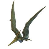 Pteranodon Dinosaur Wings Up Stock Photos