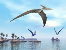 Pteranodon dinosaurs flying - 3D render. Three pteranodon dinosaurs flying upon landscape with hills, palm trees and water in cloudy sunset sky Stock Images