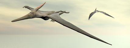Pteranodon dinosaurs flying - 3D render Royalty Free Stock Image