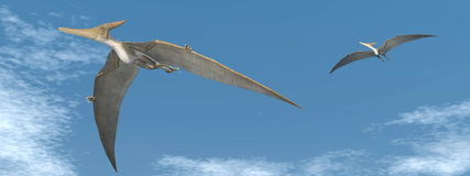 Pteranodon dinosaurs flying - 3D render Stock Photography