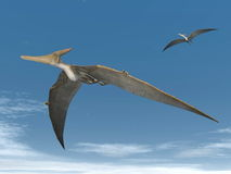 Pteranodon dinosaurs flying - 3D render. Two pteranodon dinosaurs flying in the sky Royalty Free Stock Images
