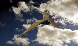 Pteranodon Royalty Free Stock Photo