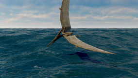 Pteranodon. The image of a flying dinosaur pteranodon Royalty Free Stock Images