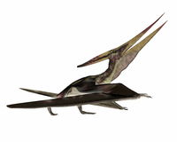 Pteranodon marchant - 3D rendent illustration libre de droits