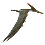 Pteranodon Reptiel Zijprofiel Royalty-vrije Stock Afbeeldingen