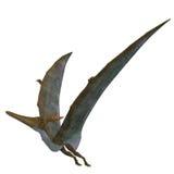 Pteranodon Reptielvleugels omhoog Royalty-vrije Stock Afbeelding