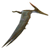 Pteranodon Reptile Side Profile Royalty Free Stock Images