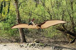 Pteranodontidae Dinosaur Model with Open Wings Royalty Free Stock Image