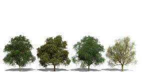 Pterocarpum Peltophorum (Four Seasons) ελεύθερη απεικόνιση δικαιώματος