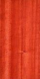 Pterocarpus (struttura di legno) Immagini Stock Libere da Diritti
