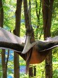 pterodactyl Πετώντας δεινόσαυρος στοκ φωτογραφία