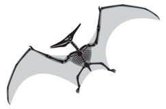 Pterodactyl. The figure shows a pterodactyl Royalty Free Stock Photo