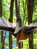 Pterodactyl. Flying dinosaur Stock Photography