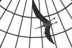 Pterodactyl Stock Images