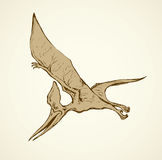 Pterodactyl. Vector drawing Stock Images