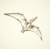 Pterodactyl. Vector drawing Stock Photography