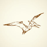 Pterodactyl. Vector drawing Royalty Free Stock Image