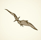 Pterodactyl. Vector drawing Royalty Free Stock Photography