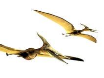 Pterodactyls Stock Photos