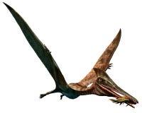 Pterodactylus Arkivbilder