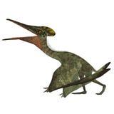 Pterodactylus mit gefalteten Flügeln Stockfotos