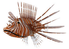 Pterois or Lionfish. 3D digital render of a Pterois or lionfish, a genus of venomous marine fish from the Indo-Pacific, isolated on white background Royalty Free Stock Photo
